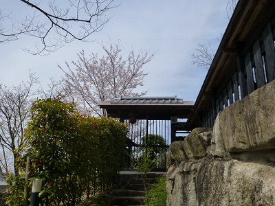 The Japanese gate & Yoshino cherry tree