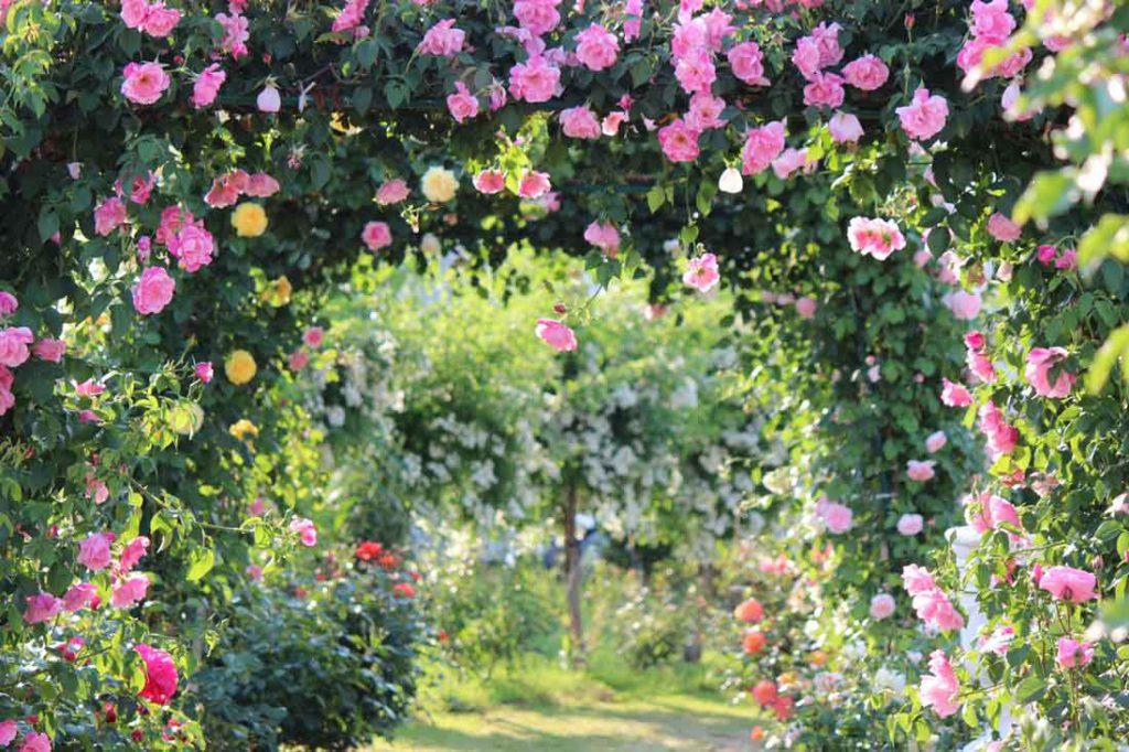 『テコラ(tecora)』はお庭の素敵な相棒!