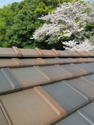 屋根 と 桜