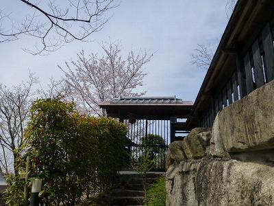 おちゃむの『よろこびの庭』-桜の季節 門