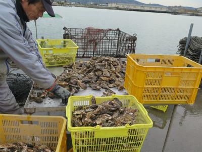 虫明産 牡蠣