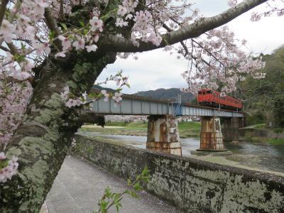津山線と桜