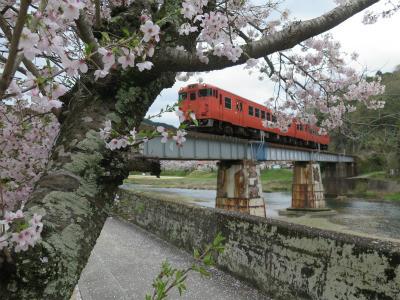 津山線 桜