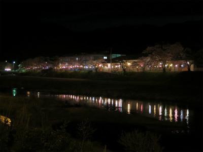 宇甘川 桜 夜