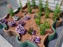 おちゃむの『よろこびの庭』-事務所前にて 瓦粉砕の中に花
