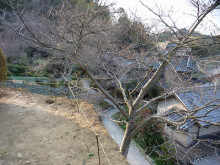 おちゃむの『よろこびの庭』-國定様邸 既存塀撤去