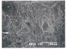 おちゃむの『よろこびの庭』-規格外瓦 顕微鏡